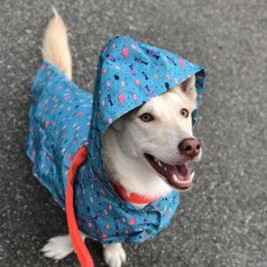 RC Pet Products Packable Shoal Dog Rain Poncho