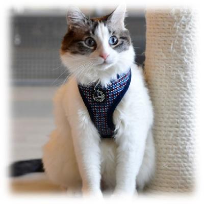 Catspia Darke Navy Cat