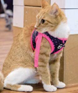 Catspia Cora Pink Cat
