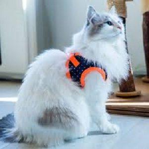 Catspia Cora Orange