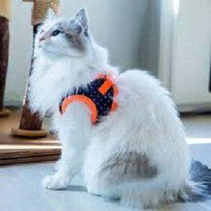 Catspia Cora Orange Cat