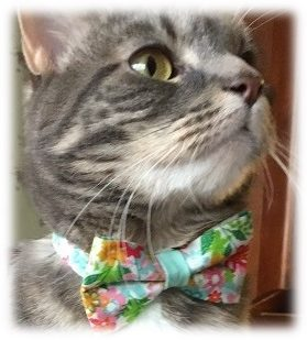 Made byCleo Marigolds and Mint Floral Bow Tie Cat Collar