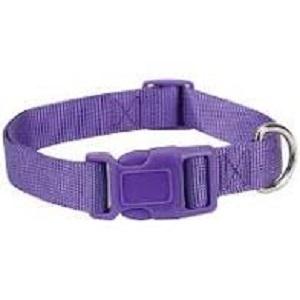 Casual Canine Purple