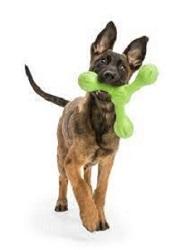 West paw dog
